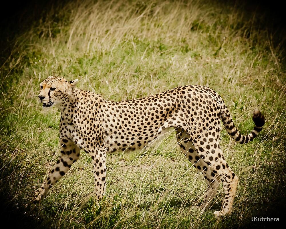 Cheetah by JKutchera