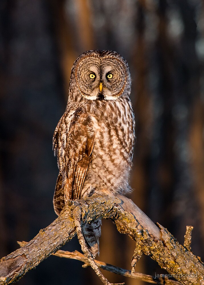 Perched by jamesmcdonald