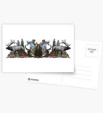 North American Wildlife  Postcards
