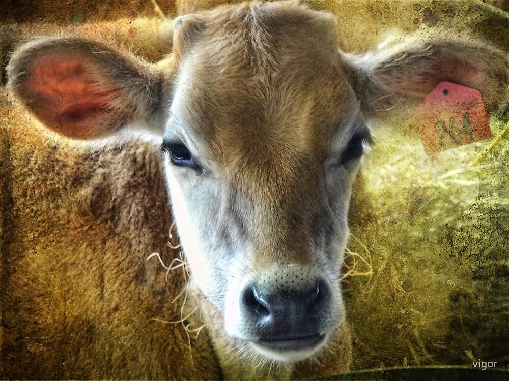 baby bovine by vigor