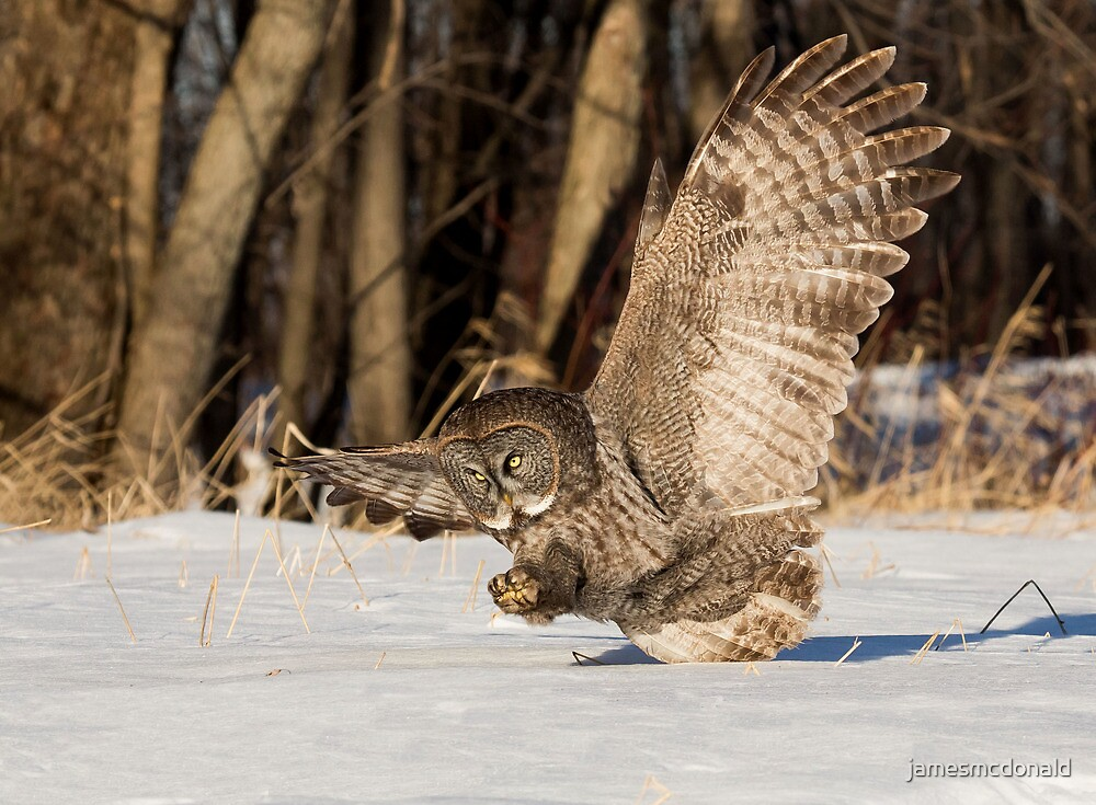 Hunting action by jamesmcdonald