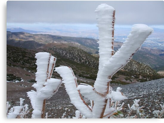 Frost,on top of Mt Rose,Reno Nevada USA by Anthony & Nancy  Leake