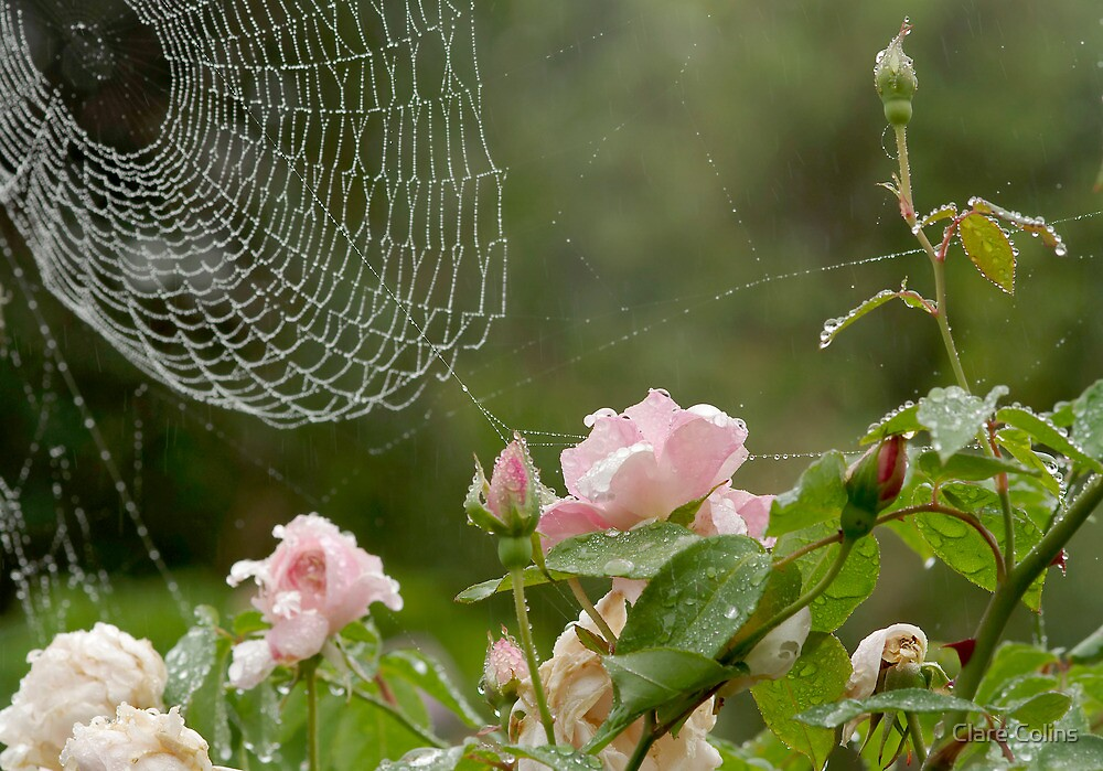 cobwebs, roses and raindrops by Clare Colins