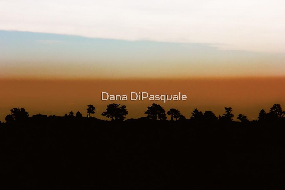 1974 by Dana DiPasquale