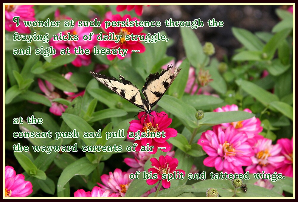 The Courage of Tattered Wings by Paula Tohline  Calhoun
