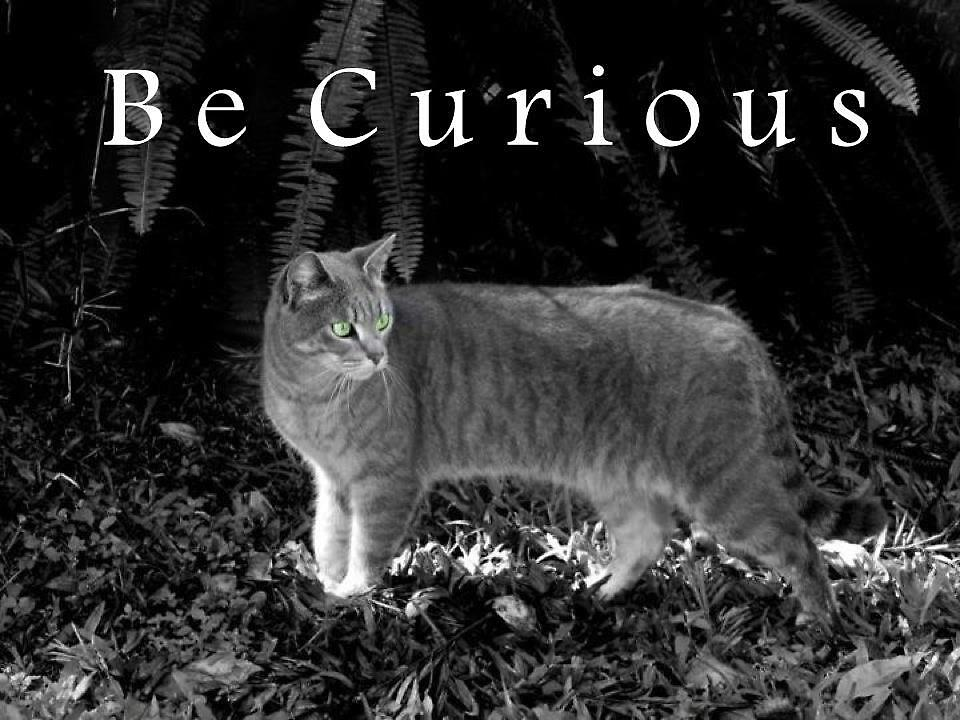 Be Curious by balletdancer