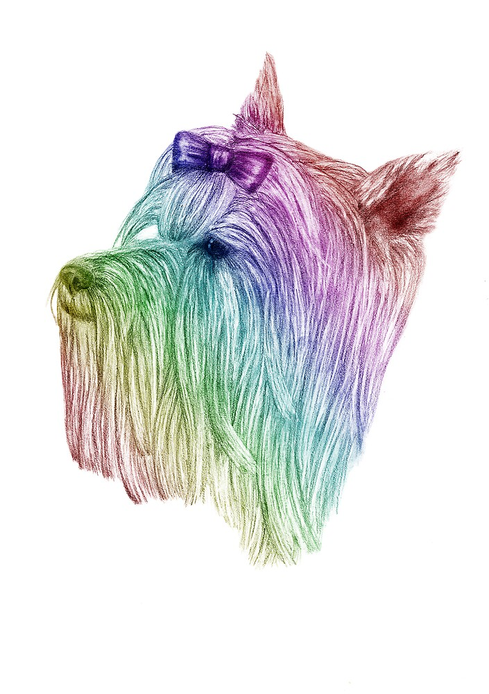 Yorkshire Terrier - Colour by ElleCS