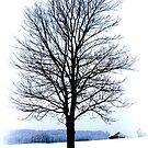 Solitary Winter Tree by ©The Creative  Minds