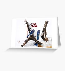 Blue jays in Winter Greeting Card