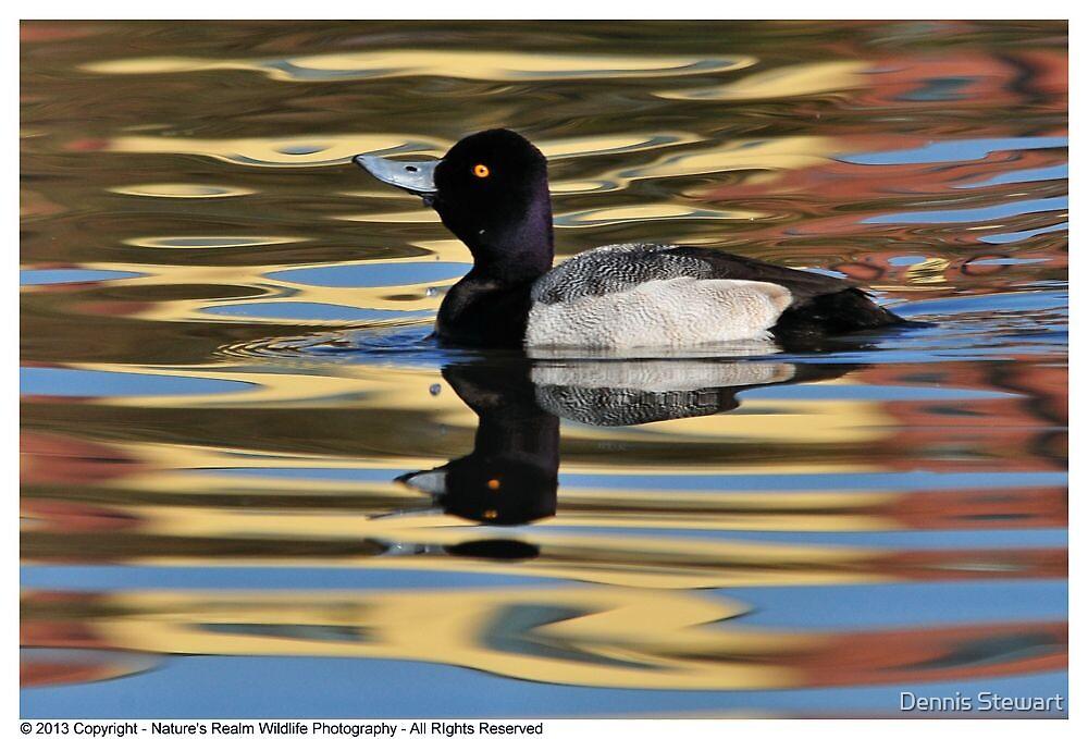 Duck Lesser Scaup -Jan 2013 (2) by Dennis Stewart