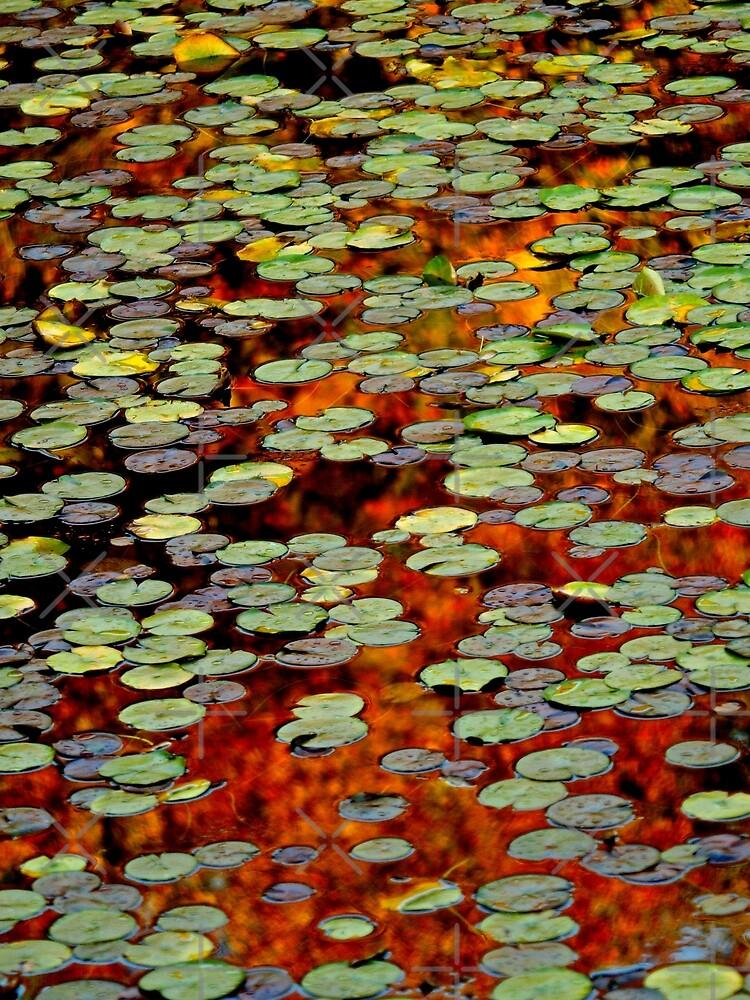 Upton Frog Pond Reflection by BavosiPhotoArt