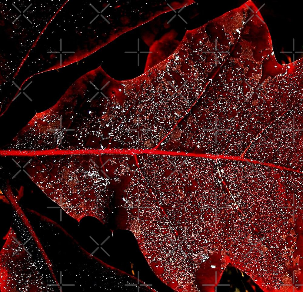 Red Leaf Abstract lll by BavosiPhotoArt