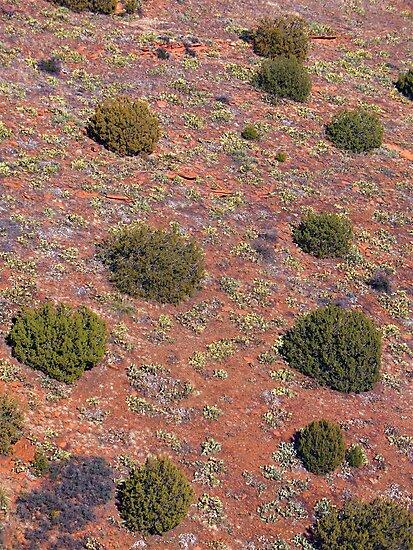 Lichen, Juniper, & Supai Sandstone #3 by SphericSenseS