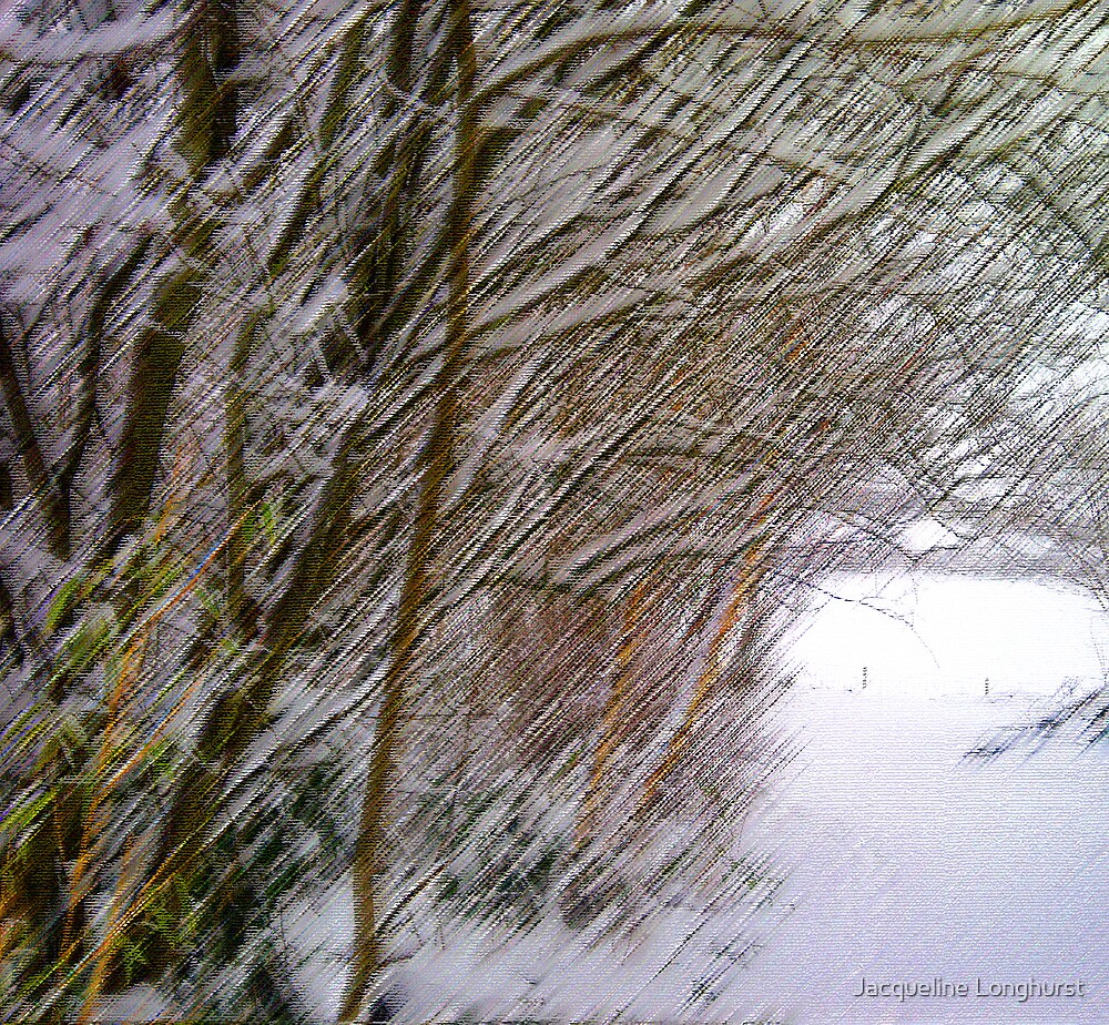 Winter Trees in the Snow by Jacqueline Longhurst