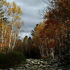 New Hampshire Dry Brook by BavosiPhotoArt