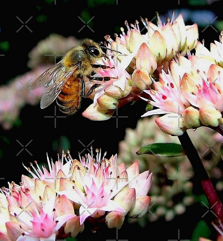 Honey Bee On Sedum l by BavosiPhotoArt