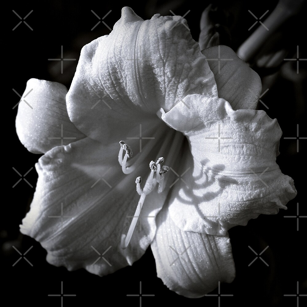 Asiatic Lily In Black And White by BavosiPhotoArt