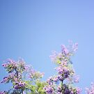 Jacaranda Tree by Kameron Walsh