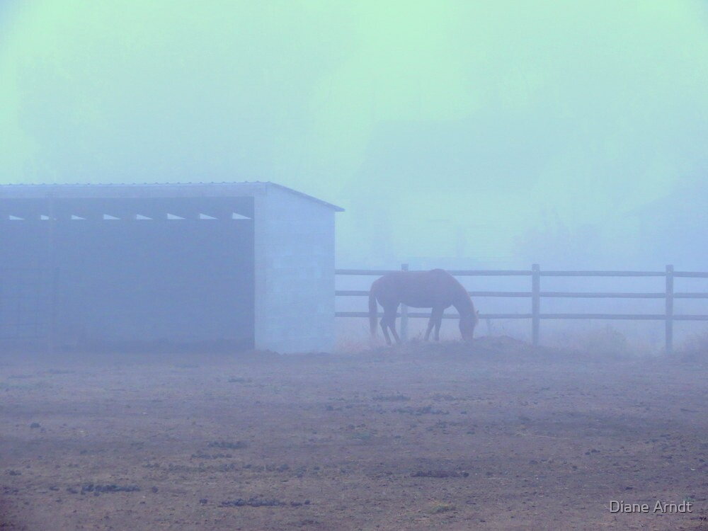 A Horses Morning by Diane Arndt