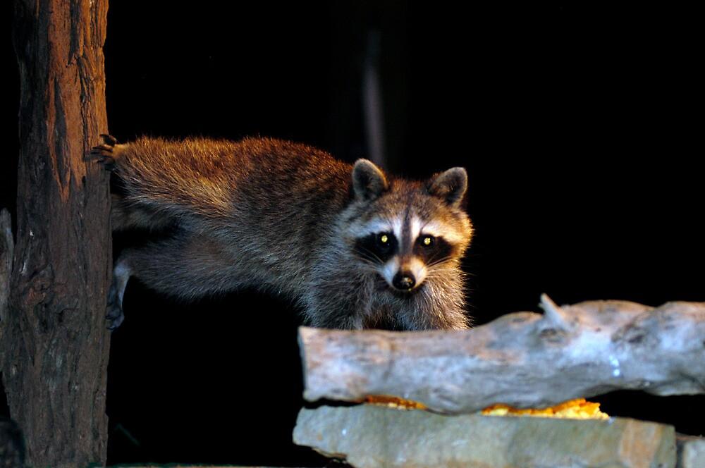 The Cornbread bandit Homestretch  by Randy Branham