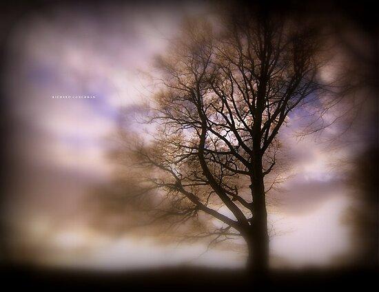 """"""" Feelings """"   by Richard Couchman"""