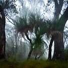 Grass Trees in the Mist by Odille Esmonde-Morgan