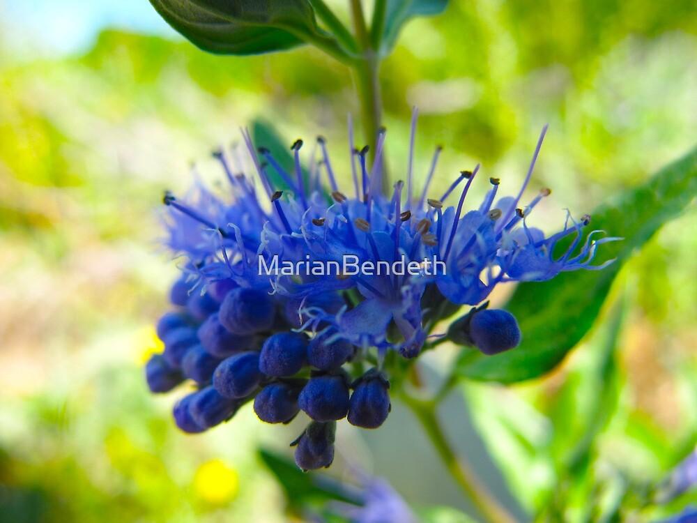 Bifocal Blue by MarianBendeth