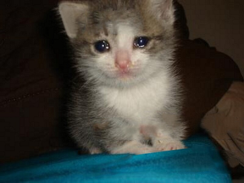 Cats Crying Videos