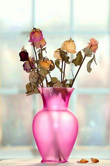 Dry Roses.. by JOSEPHMAZZUCCO