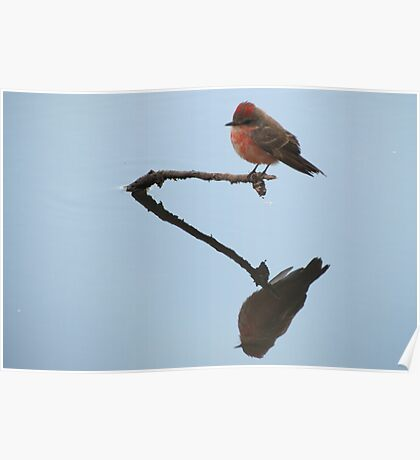 Vermilion Flycatcher (Reflections of Tranquility)  Poster