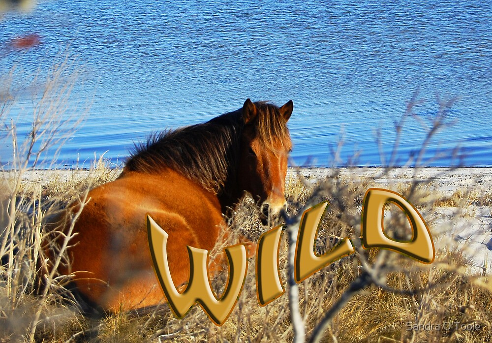 WILD by Sandy O'Toole