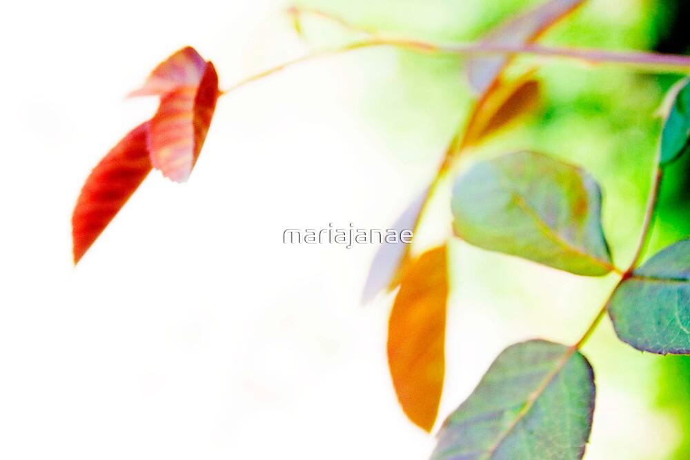 009 by mariajanae