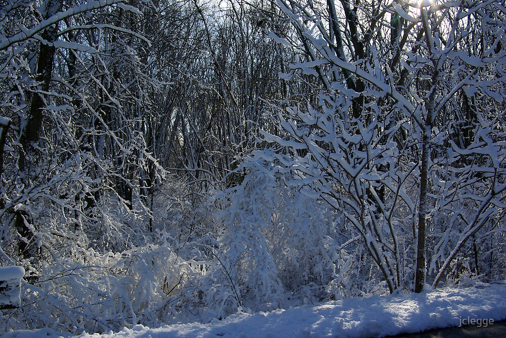 Snow on theTrees by jclegge