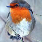European Robin by larry flewers