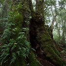Antarctic Beech  by Andrew Durick
