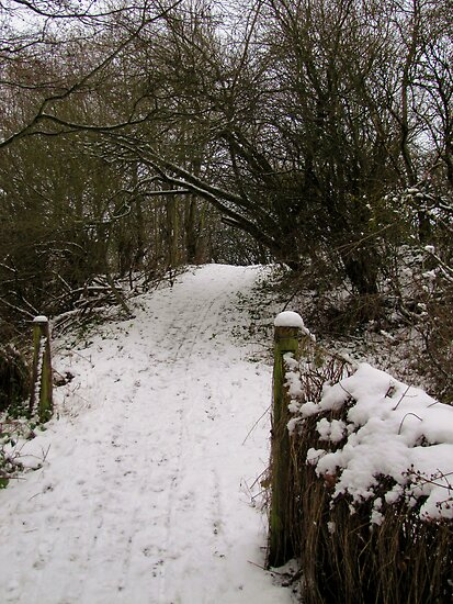 Winter in the Woods by Carol Bleasdale