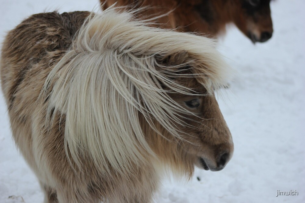 Shetland Pony, horse,snow by jimwish