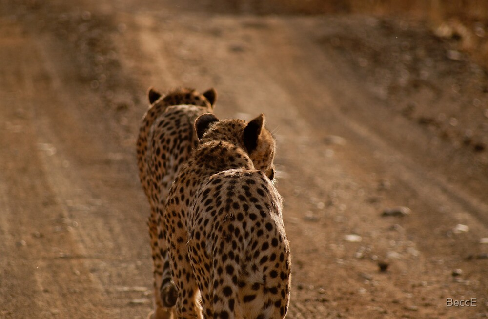 Stalking Cheetahs by BeccE