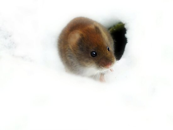 How can you resist this little cute mousie.. by Yool