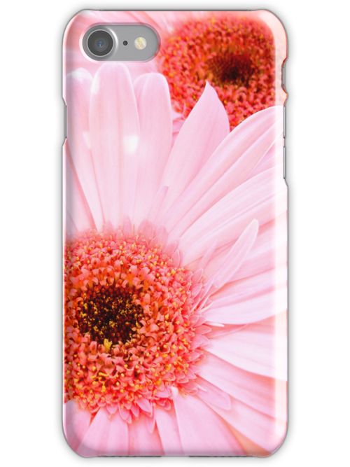 Pink Gebera's by Alex & Louise Martin