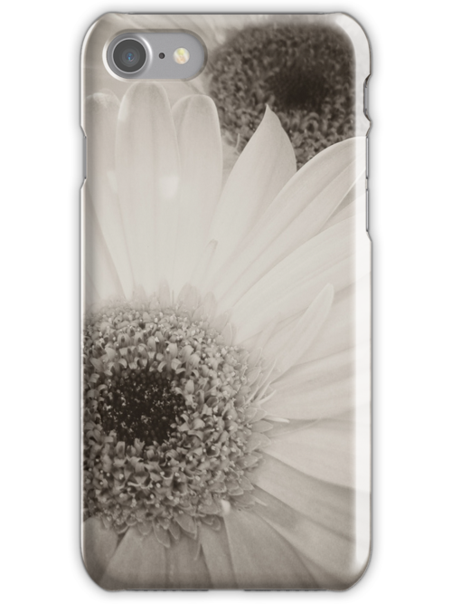 Black & white gebera's by Alex & Louise Martin