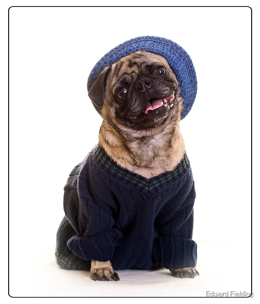 Cute Pug wearing hat and sweater by Edward Fielding