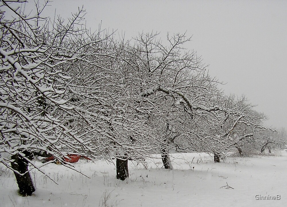 Winter Apple Orchard by GinnineB