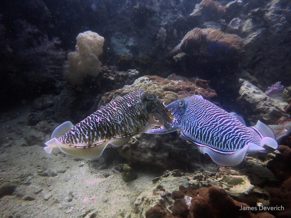 Cuttle Fish by James Deverich