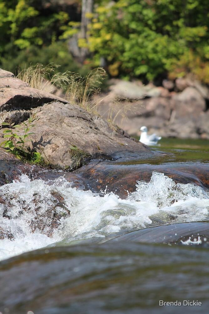Rushing waters by Brenda Dickie