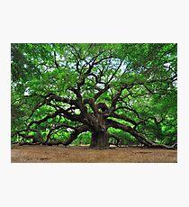 Angel Oak Photographic Print