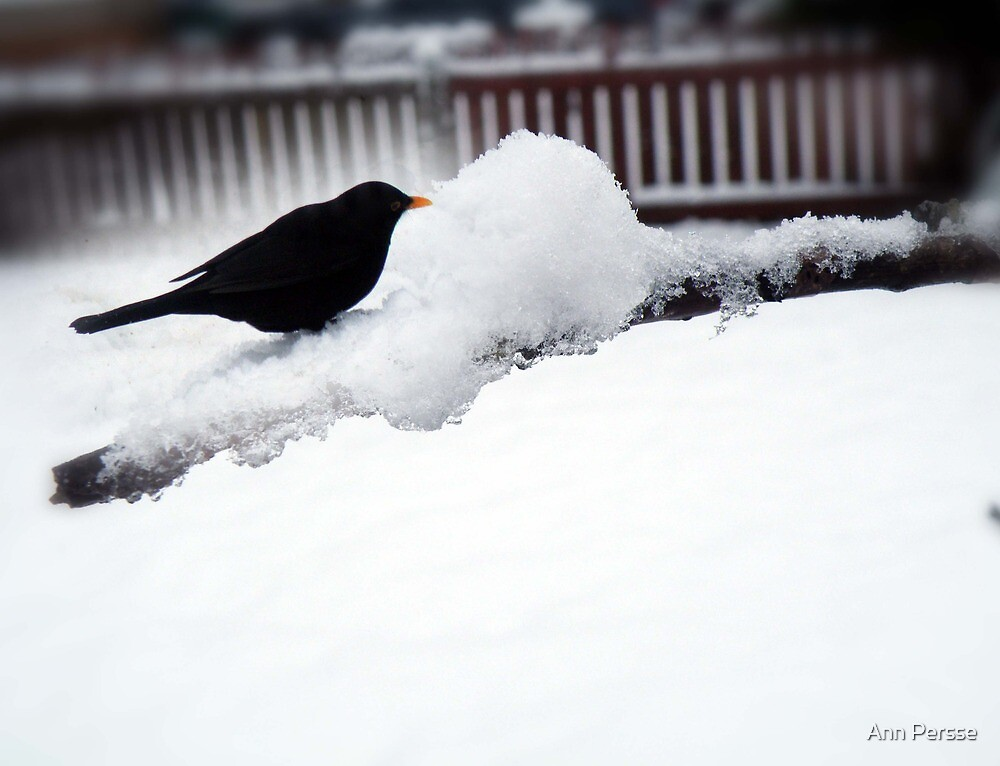 lonely bird by Ann Persse