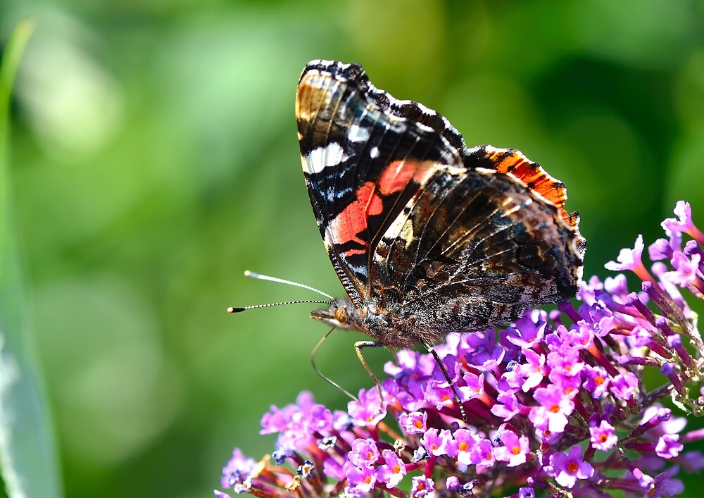 Butterfly by Moments In Time Photography