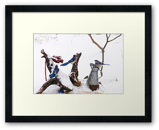 Three BlueJays enjoying the morning by Randy Branham