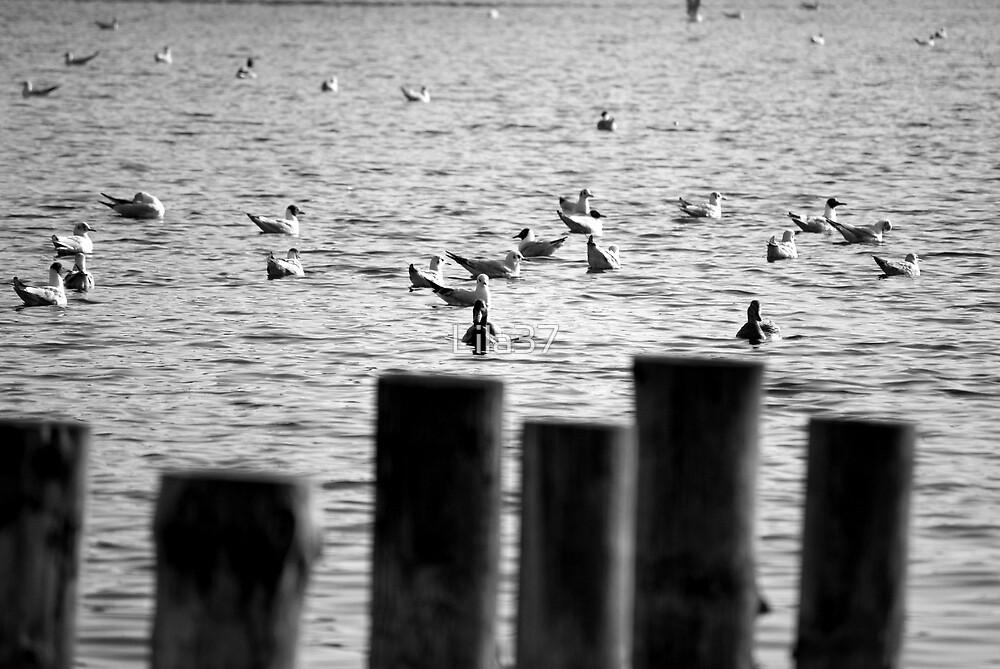 Stillness of wings by Lila37